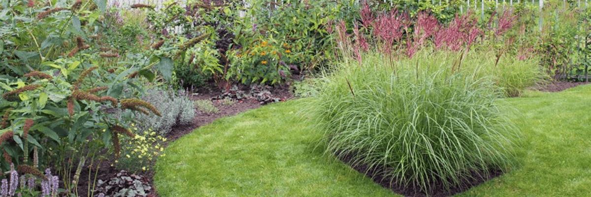 tuinonderhoud tjeerd van netten hoveniers